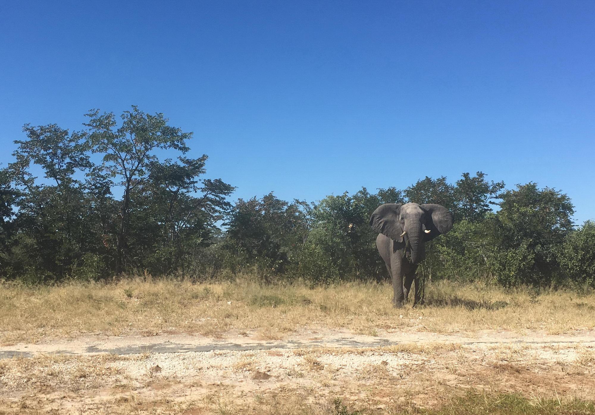 prvi afriški slon