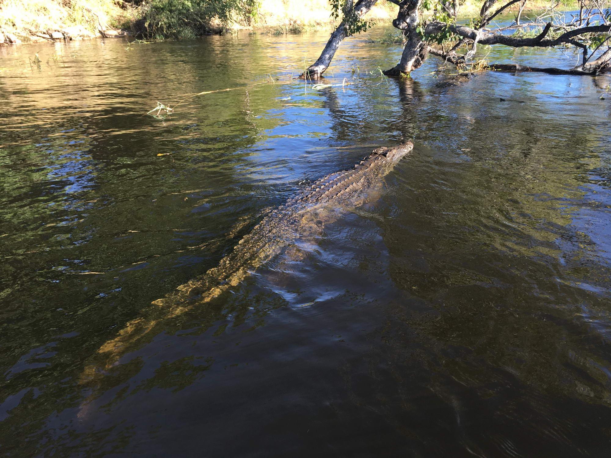 gromozanski krokodil