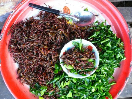 laos-2012_10
