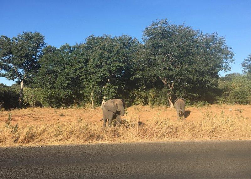še več slonov