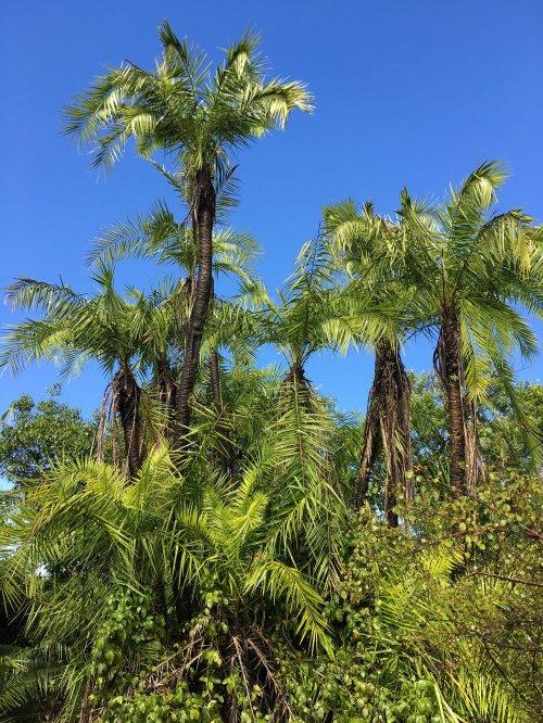 Tropska džungla