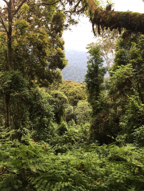 ruandska džungla