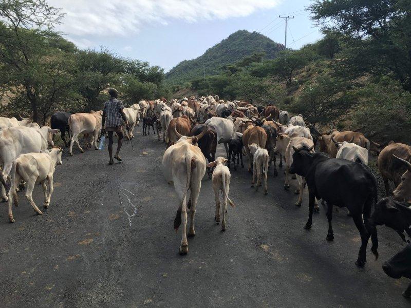 največja afriška grožnja za motorista