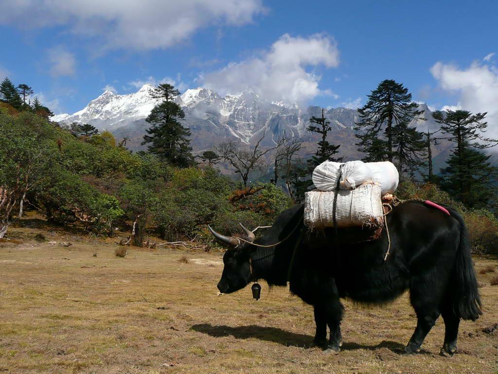 2009-Indija_11