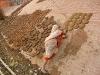 2009-Indija_43