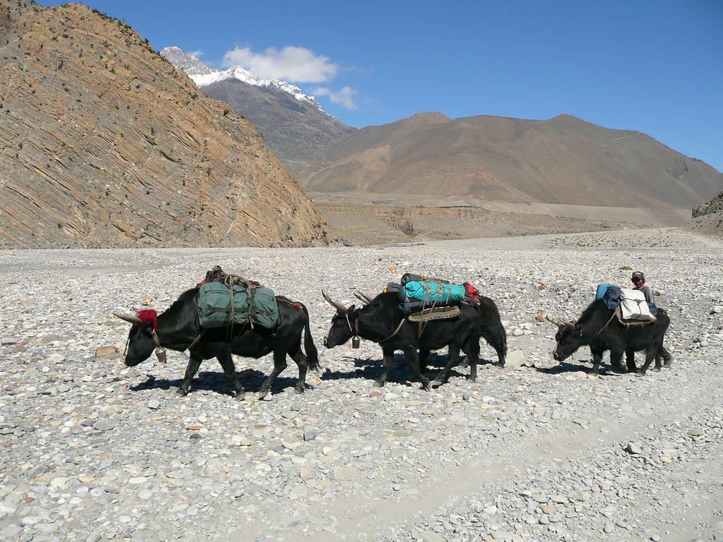 2009-Nepal_67