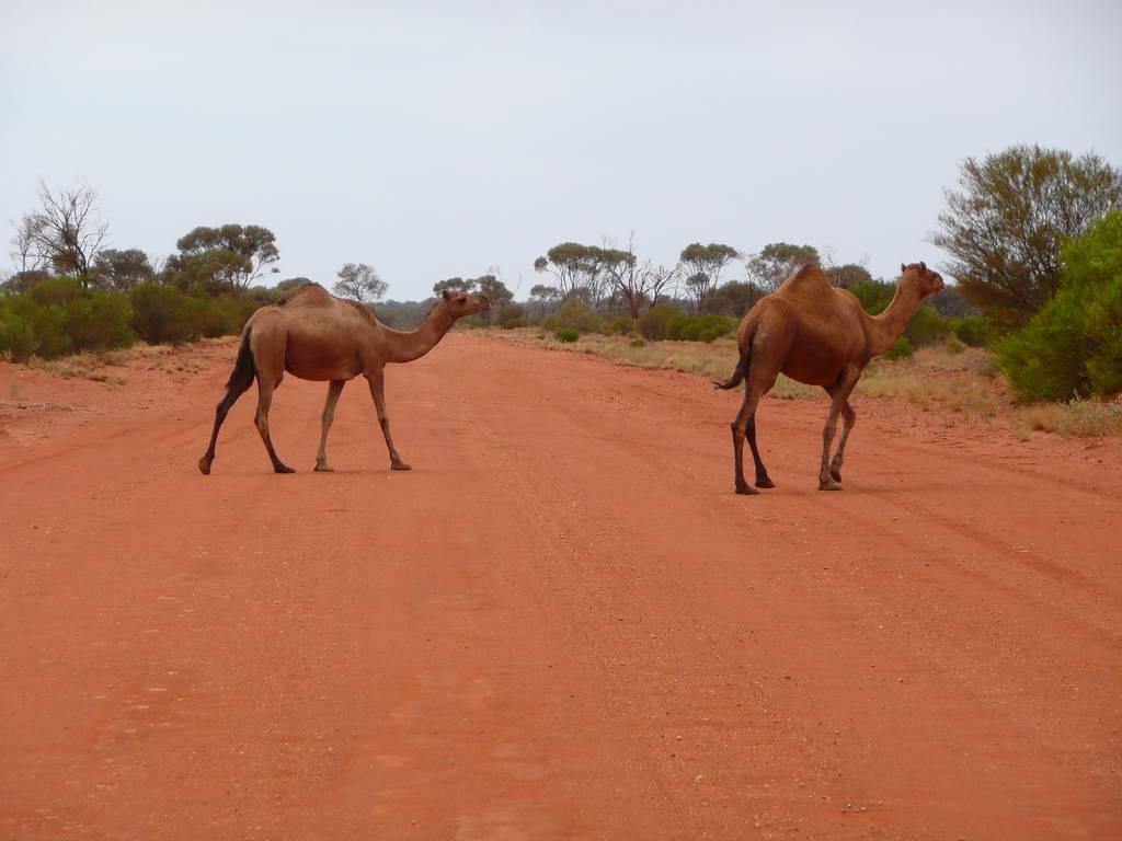 2010-Avstralija_088