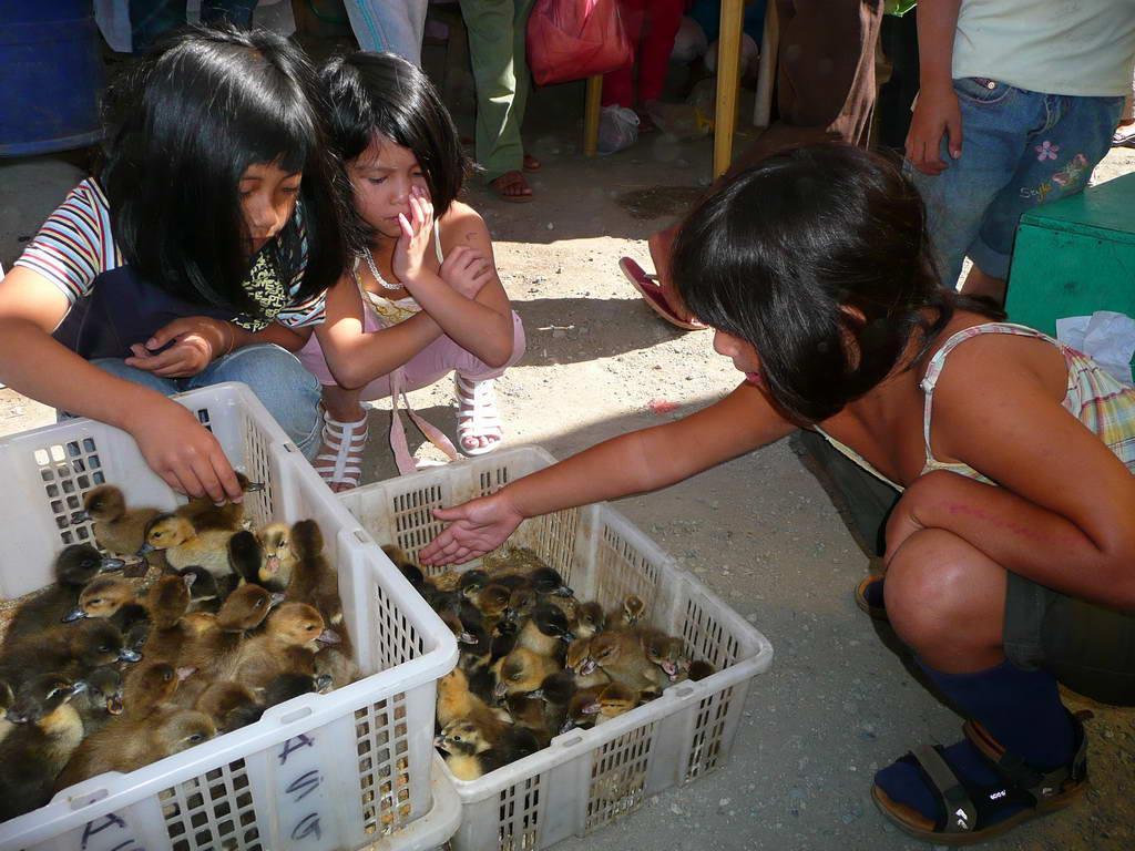 2010-Filipini_013