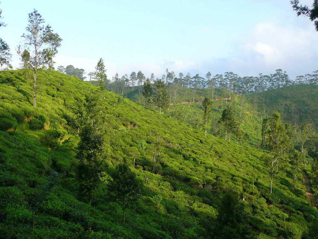 2010-Srilanka_012