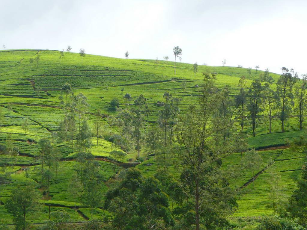 2010-Srilanka_013