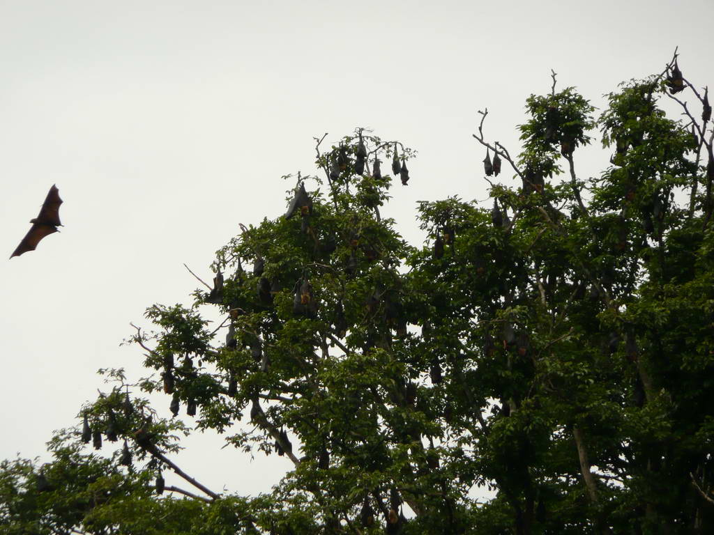 2010-Srilanka_022