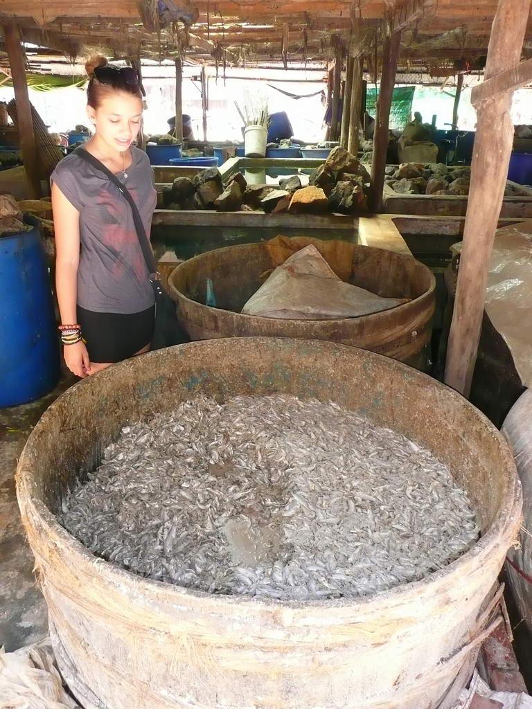 Laos-2012_105