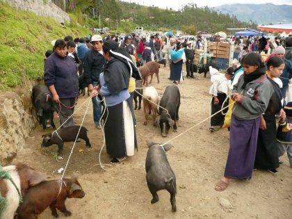 2010-Ekvador_15