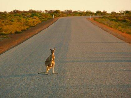 2010-Avstralija_047