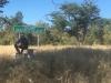 zadrževanje na območju divijh živali na lastno odgovornost