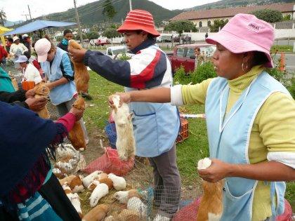 2010-Ekvador_17
