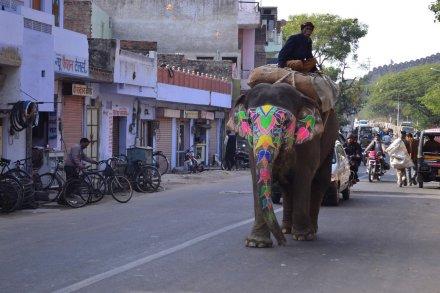 Indija-2013_29