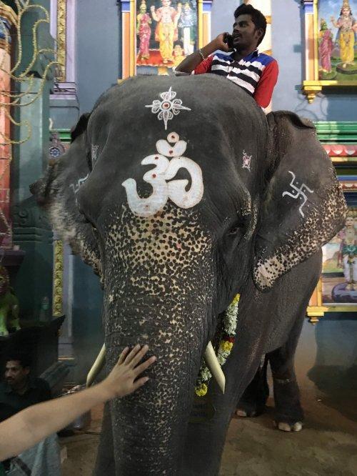 Slonica Laksmi daje blagoslov, Puducherry