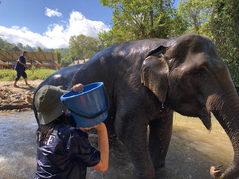 Kopanje slončka