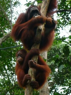 2009-Malezija_42
