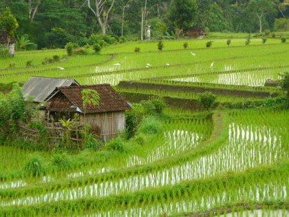 2009-Indonezija_20