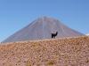 2008-argentina&chile_36.JPG