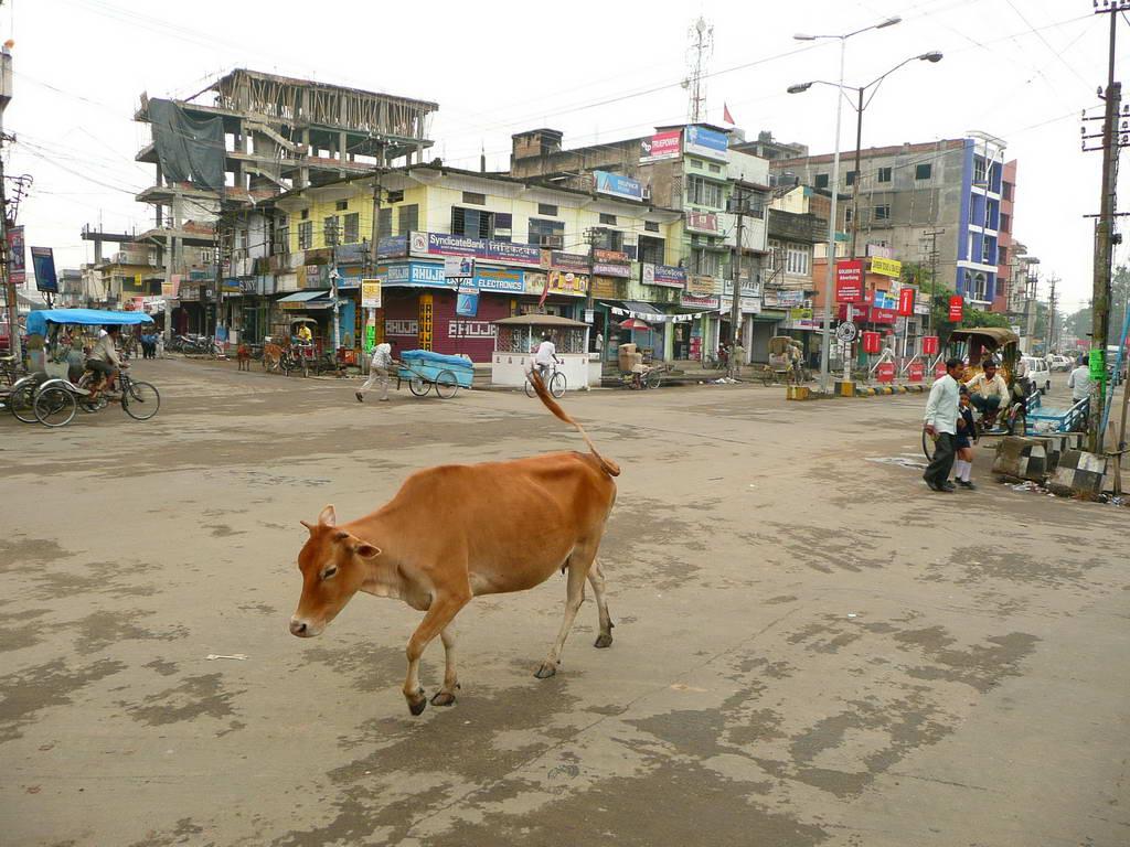 2009-Indija_35