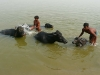2009-Indija_56