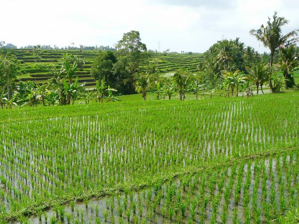 2009-Indonezija_21