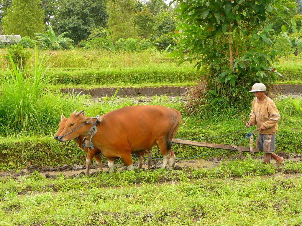 2009-Indonezija_23