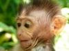 2009-Indonezija_60