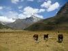 2010-Peru_33