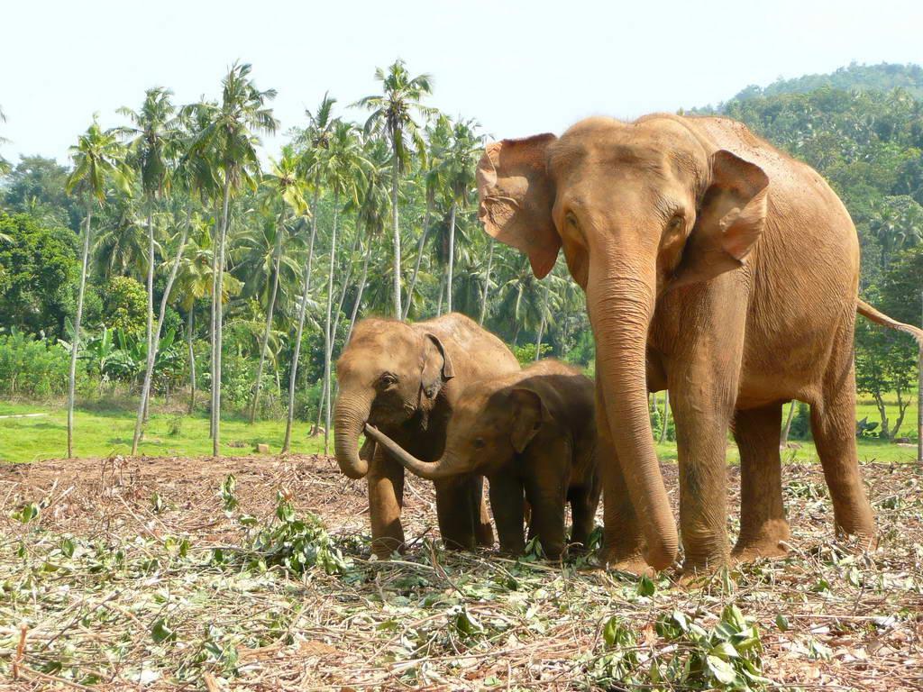 2010-Srilanka_025