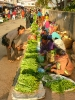 laos-2012_40