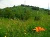 Kolovrat nad Kobaridom, travnik